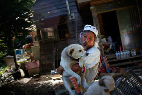 Inside Fukushima's exclusion zone, a farmer sheltered over 500 abandoned animals | Animals | Scoop.it