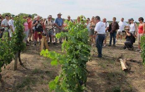 Nouvelle République : Les vignerons de Bourgueil cultivent l'oenotourisme -   Oenotourisme   Scoop.it