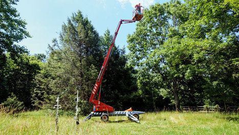 Biologist Climbs High to Prove Hypothesis About Plants | Tree Preservation Planning | Scoop.it