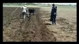 Ethiopian plow wins $25.000   FarmingAfrica.net   Scoop.it
