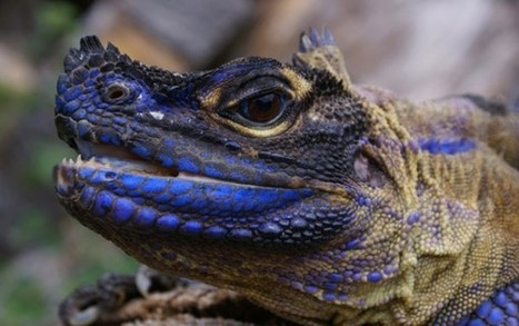 Beauty and the Beast | A Sailfin Dragon | Looks -Pictures, Images, Visual Languages | Scoop.it