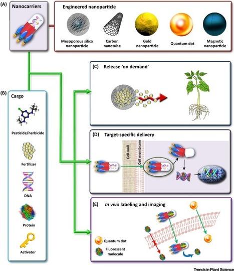 Nanotechnology: A New Opportunity in Plant Sciences | Plant Gene Seeker -PGS | Scoop.it