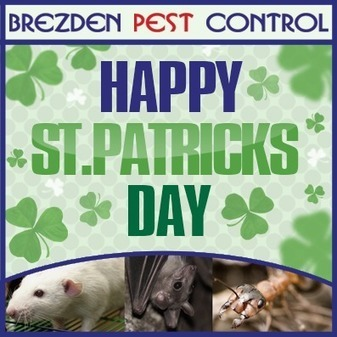Brezden Pest Control: Say no to pests this St. Patrick's Day | Home Maintenance | Scoop.it