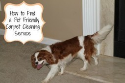 How to Find a Pet Friendly Carpet Cleaning Service | My Huggable Pet | Scoop.it