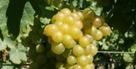 Vin : Beaumes-de-Venise se réinvente | Domaine des Bernardins & WEB | Scoop.it