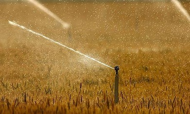 Global Food Crisis Will Worsen as Heat Waves Increase | Climate Central | Climate change challenges | Scoop.it