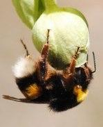"EBD publication: ""Cryptic influence of nectar-dwelling yeasts"" // ""La influencia... | PublicacionesEBD | Scoop.it"