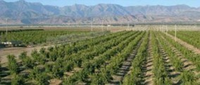 L'agriculture marocaine intéresse les investisseurs du Golfe | L'agriculture marocaine | Scoop.it
