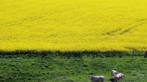 Soigneurs de terres, documentaire sur les sols et l'agro-écologie - France 2 | Design de permaculture | Scoop.it