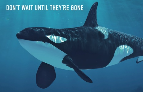 Help endangered killer whales | David Suzuki Foundation | Nature Animals humankind | Scoop.it