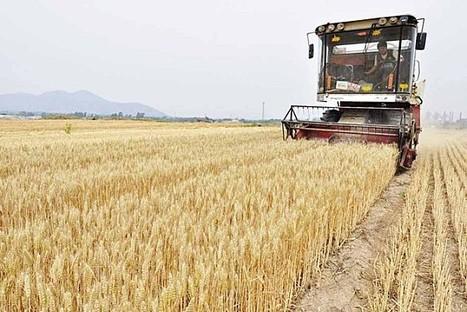 Produire son blé et son pain | Actu Boulangerie Patisserie Restauration Traiteur | Scoop.it