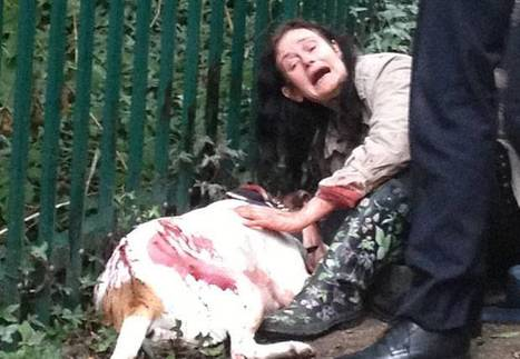 Dog is stabbed 23 times in frenzied 'revenge' attack   The Indigenous Uprising of the British Isles   Scoop.it