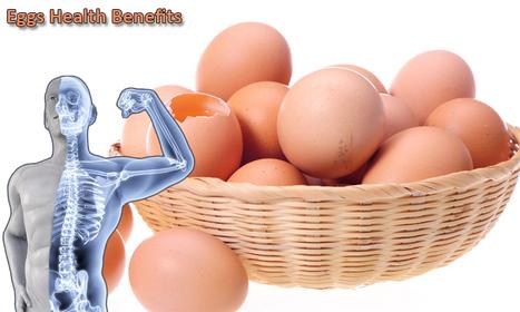 Venky's Nutrition The Best Source Of Egg Diet & Protein | Health | Fitness | Bodybuilding Supplement | Scoop.it