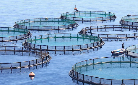 The U.S. Is Farming More Fish than Ever (But Nowhere Near What China Does) - Modern Farmer | Sustain Our Earth | Scoop.it