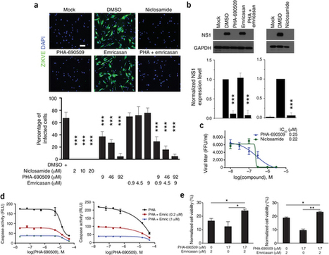 Identification of small-molecule inhibitors of Zika virus infection and induced neural cell death | Viruses and Bioinformatics from Virology.uvic.ca | Scoop.it