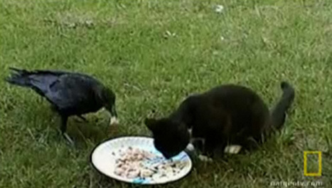 Opposites attract: The kitten raised by a crow | Xposed | Scoop.it