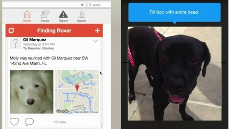 Free app uses facial recognition to find lost pets | Animals R Us | Scoop.it