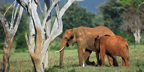 Plus de la moitié des vertébrés ont disparu en quarante ans | Nature Animals humankind | Scoop.it