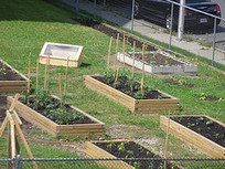 Farmers For Chicago | Worcester Food and Active Living Policy ... | Vertical Farm - Food Factory | Scoop.it