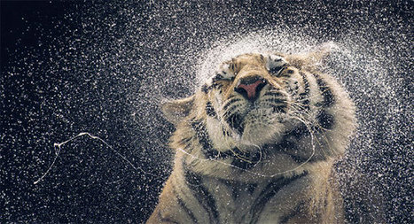 More Than Human: Tim Flach's Striking Portraits of Animals | Hunted & Gathered | Scoop.it