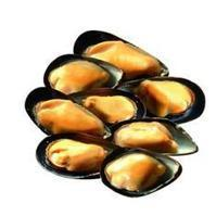 "News: AQUA.cl ""New project will identify Chilean mussel species and its origin"" - May 2013 