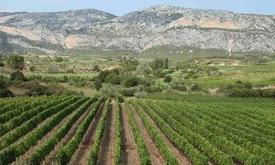 Sardinia wine route: top 10 guide | Italia Mia | Scoop.it