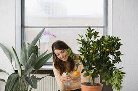 Piante d'appartamento davvero speciali ~ Ecosostenibile | Naturopatia e benessere: consigli e rimedi per l'armonia di mente, anima e corpo | Scoop.it
