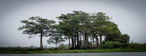 Blog Incite   Le Blog des échanges Porto Novo-Cergy-Incite   Coopération décentralisée - Eragny   Scoop.it