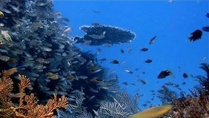 Video -- Why the Ocean Matters  -- National Geographic | FCHS AP HUMAN GEOGRAPHY | Scoop.it