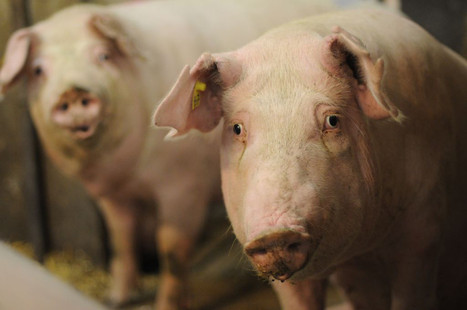 5 Powerful Videos on Factory Farming (Without the Gore) | A World of Oneness | Scoop.it