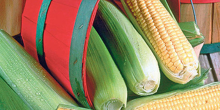 Genetically modified corn regulation sows seeds of discontent in Turkey - Too Late, They're In !!! | YOUR FOOD, YOUR HEALTH: Latest on BiotechFood, GMOs, Pesticides, Chemicals, CAFOs, Industrial Food | Scoop.it