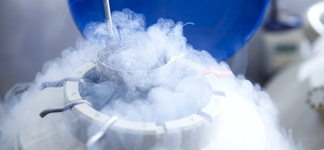 Why Apple's Offer to Freeze Employees' Eggs Isn't Really a 'Perk' | Human Resources | Scoop.it