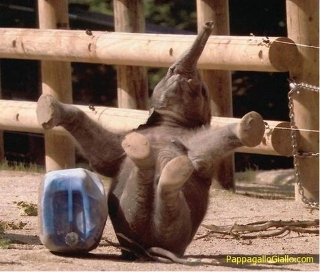 Un sorriso nel mondo degli animali (26 foto)   ANIMALI   Scoop.it