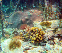 Climate: Coral reefs taking a big hit this year | GarryRogers Biosphere News | Scoop.it