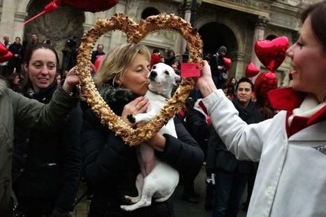 Pourquoi les Français sont-ils fous de leurs chiens ? | FLE et nouvelles technologies | Scoop.it