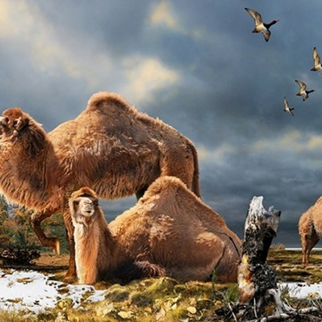 Palaeontologists discover giant camel species that lived in the High Arctic (Wired UK) | History | Scoop.it