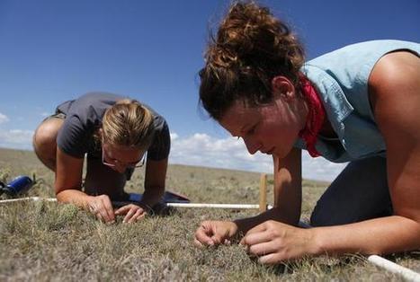 Colorado scientists simulate super-drought to test prairie production limits - The Denver Post | Climate change challenges | Scoop.it