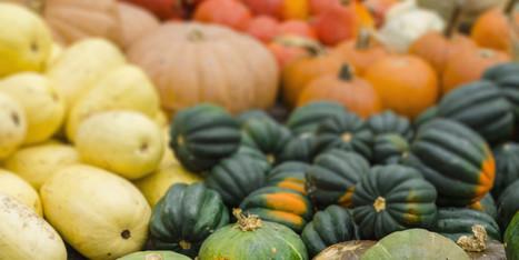 Beyond Pumpkin: Meet Its Cousins - Huffington Post   Cucurbitaceae   Scoop.it