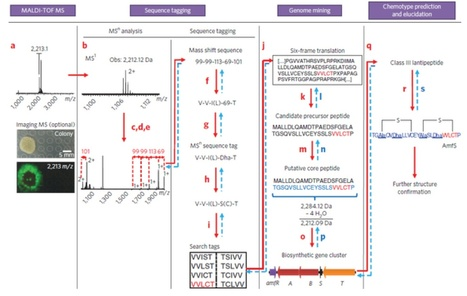A mass spectrometry–guided genome mining approach for natural product peptidogenomics | Science | Scoop.it