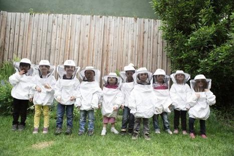 Apiculture scolaire et solidaire à Lyon | Le Petit Jardinier Urbain | Scoop.it