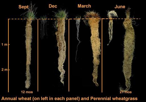 4 Seasons Roots | Plant-Microbe Interaction | Scoop.it