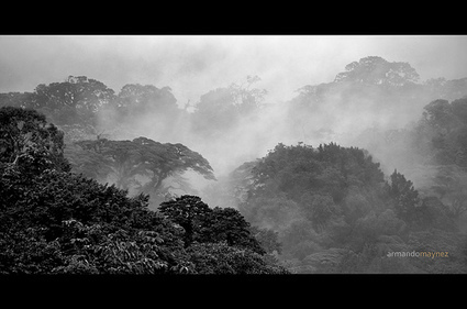 Brazil Gains in Food Production Coincided With Drop in Deforestation | Sustainable Futures | Scoop.it