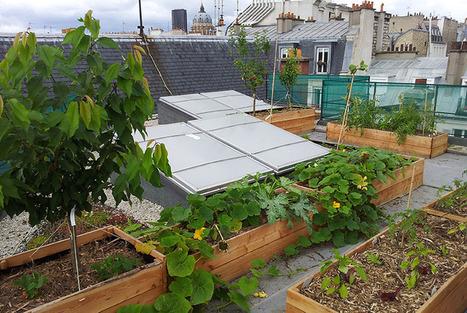 Ces potagers envahissent les toits de Paris et c'est positif ! | Société 2.0 | Scoop.it