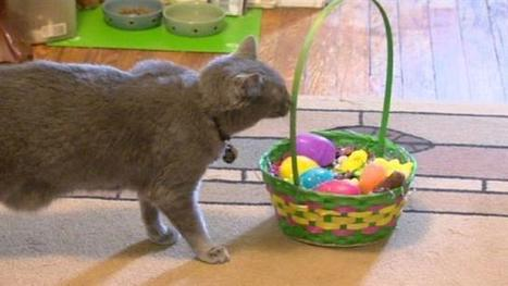 Vets warn of Easter no-no's for pets | Troy West's Show Prep | Scoop.it