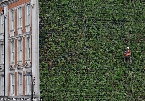 Climbing up the walls: Country's largest 'vertical garden' unveiled which experts say will prevent central London from flooding   Trabajos Verticales   Scoop.it