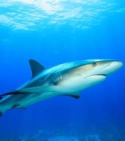 Il tue le requin de la mer Rouge qui terrorisait les touristes | Mais n'importe quoi ! | Scoop.it