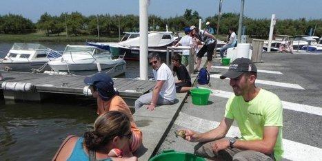 Pêche aux crabes | Coeur du Bassin d'Arcachon | Scoop.it