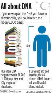 ENCODE's 'junk DNA' findings renew debate about creation, evolution | Deseret News | The ENCODE | Scoop.it