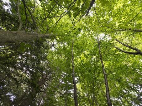 Commissioner warns of forest fragmentation | Timberland Investment | Scoop.it