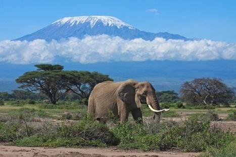 Tanzania Safari in Self drive - Il Grande Viaggio | ViaggiSudAfrica | Scoop.it
